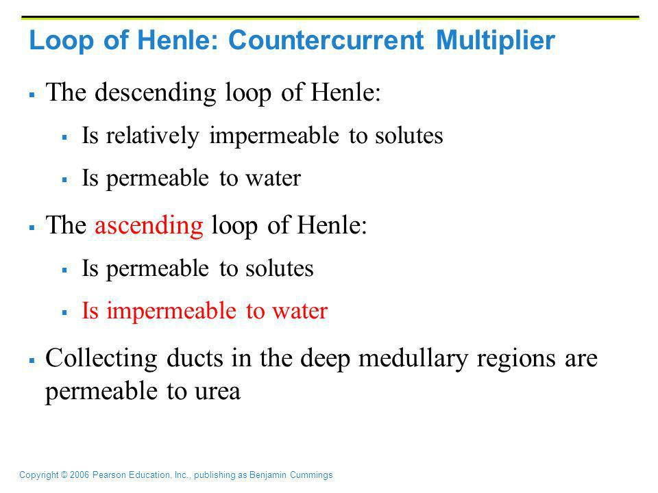 Copyright © 2006 Pearson Education, Inc., publishing as Benjamin Cummings Loop of Henle: Countercurrent Multiplier The descending loop of Henle: Is re