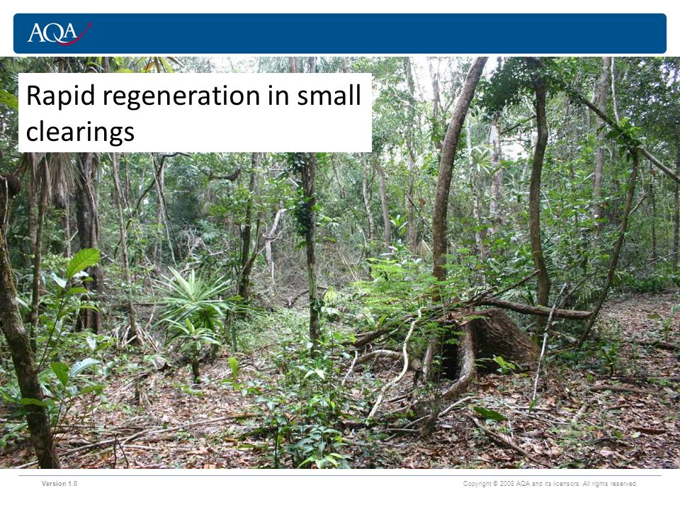 Rapid regeneration in small clearings