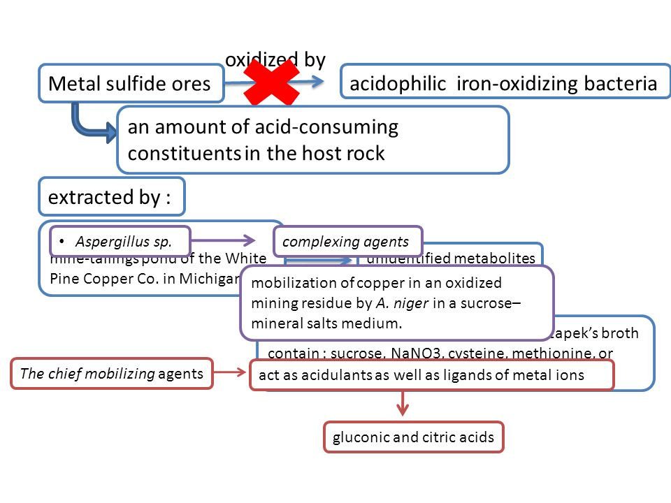 acidophilic iron-oxidizing bacteria Metal sulfide ores oxidized by an amount of acid-consuming constituents in the host rock extracted by : Penicilliu