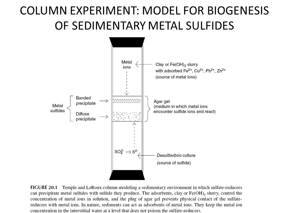 COLUMN EXPERIMENT: MODEL FOR BIOGENESIS OF SEDIMENTARY METAL SULFIDES
