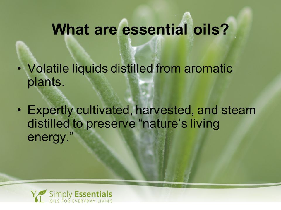What are essential oils? Volatile liquids distilled from aromatic plants. Expertly cultivated, harvested, and steam distilled to preserve natures livi