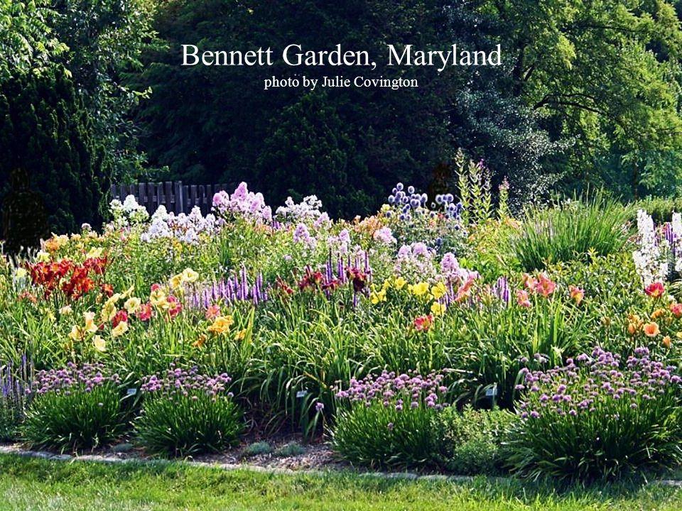 Bennett Garden, Maryland photo by Julie Covington