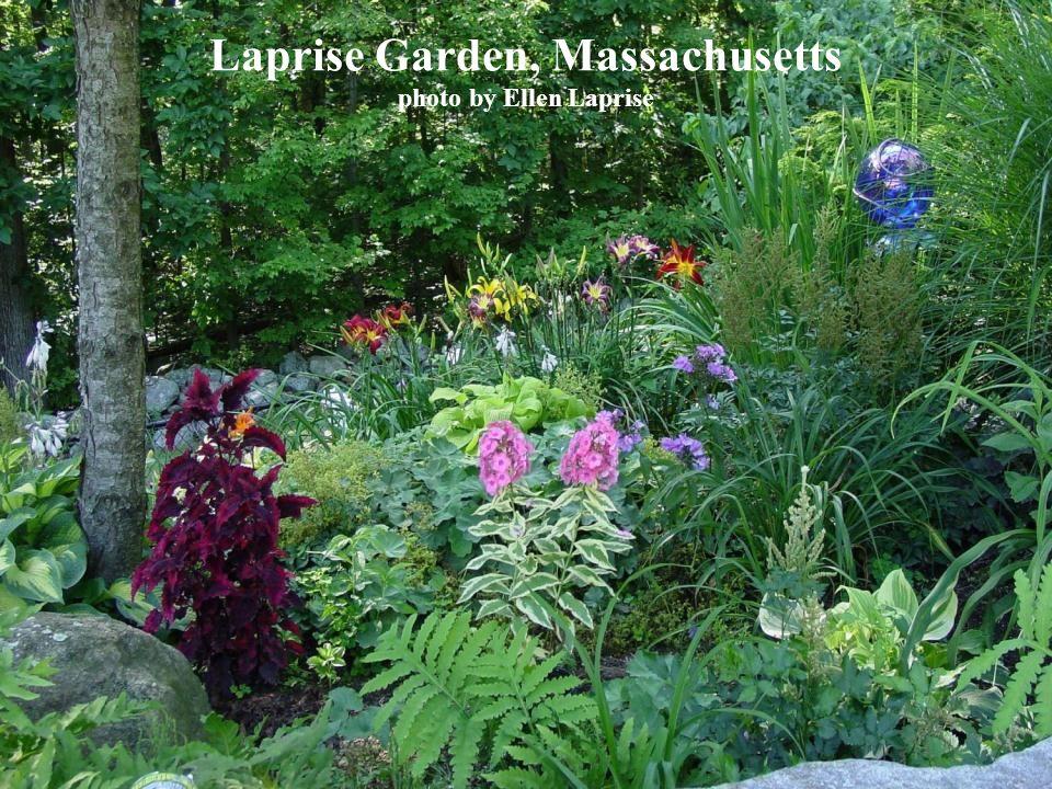 Laprise Garden, Massachusetts photo by Ellen Laprise