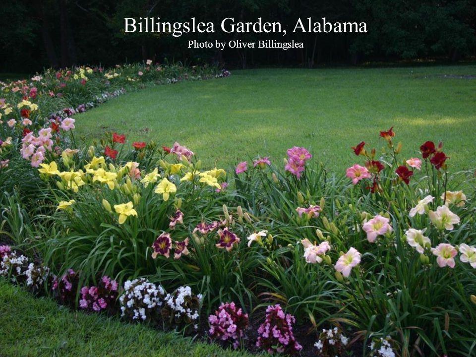 ABBill Billingslea Garden, Alabama Photo by Oliver Billingslea