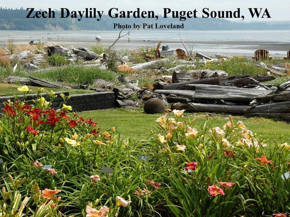 Zech Daylily Garden, Puget Sound, WA Photo by Pat Loveland