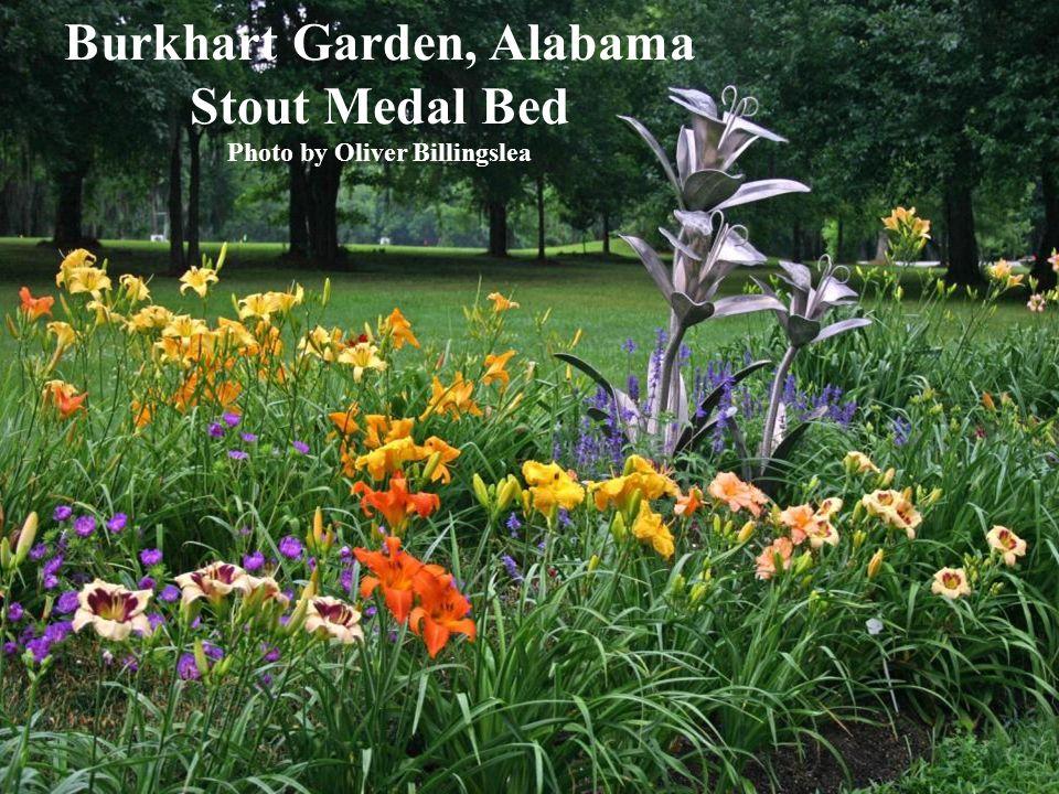 Burkhart Garden, Alabama Stout Medal Bed Photo by Oliver Billingslea