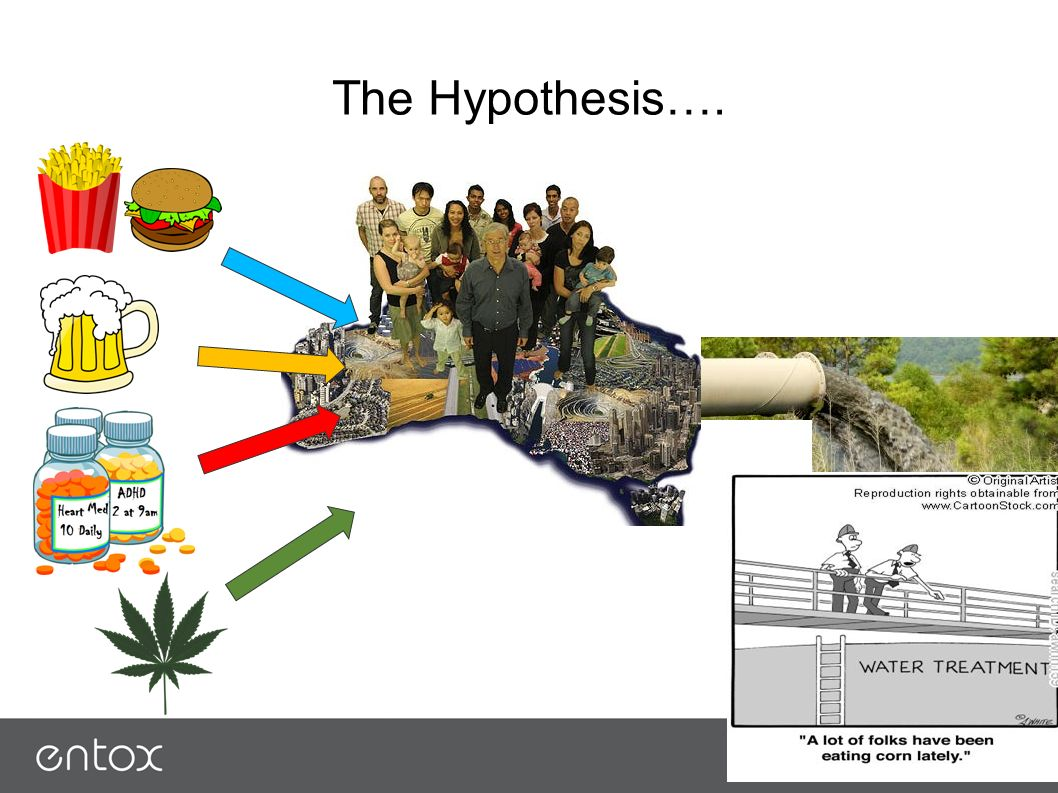 The Hypothesis….