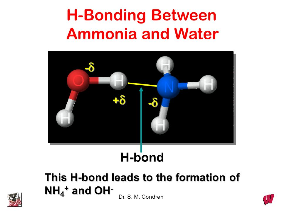 Dr. S. M. Condren - + - This H-bond leads to the formation of NH 4 + and OH - H-Bonding Between Ammonia and Water H-bond