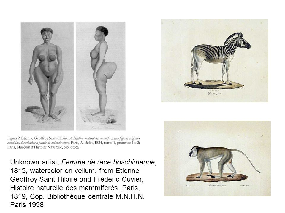 Modern Cultural Icon Historic obsession with Khoisan bodies Baartmens body cast on display at the Musee de lHomme until 2002 The historically privileged position of museological space (p.
