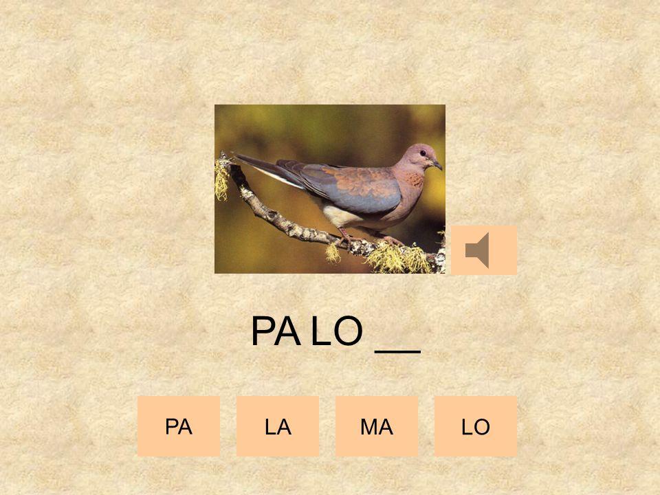 PA __ __ PA LAMA LO