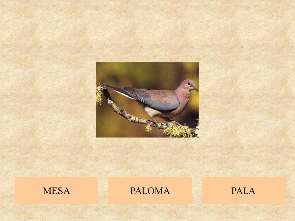 PELOPALAPISA