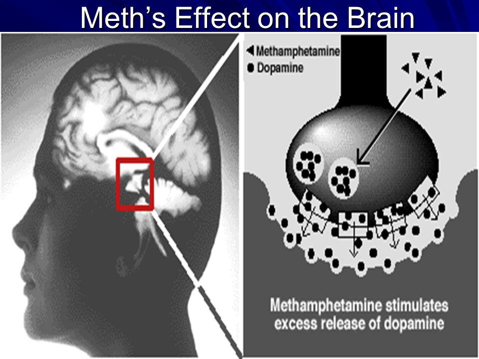 Ohio Resource Network www.ebasedprevention.org 7 Meths Effect on the Brain