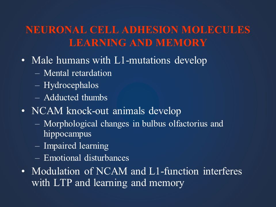 NEURONAL CELL ADHESION MOLECULES LEARNING AND MEMORY Male humans with L1-mutations develop –Mental retardation –Hydrocephalos –Adducted thumbs NCAM kn