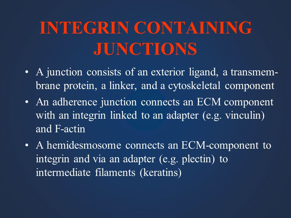 INTEGRIN CONTAINING JUNCTIONS A junction consists of an exterior ligand, a transmem- brane protein, a linker, and a cytoskeletal component An adherenc