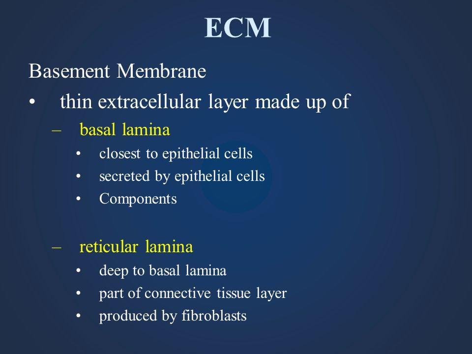 ECM Basement Membrane thin extracellular layer made up of –basal lamina closest to epithelial cells secreted by epithelial cells Components –reticular