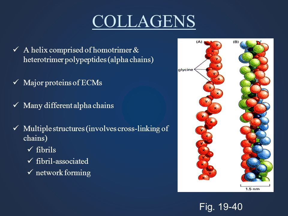 COLLAGENS A helix comprised of homotrimer & heterotrimer polypeptides (alpha chains) Major proteins of ECMs Many different alpha chains Multiple struc