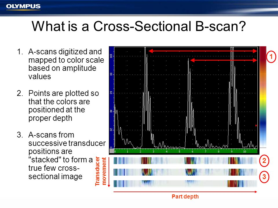 What is a Cross-Sectional B-scan? 1.A-scans digitized and mapped to color scale based on amplitude values 2.Points are plotted so that the colors are