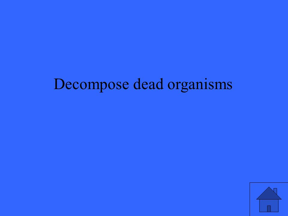 Decompose dead organisms