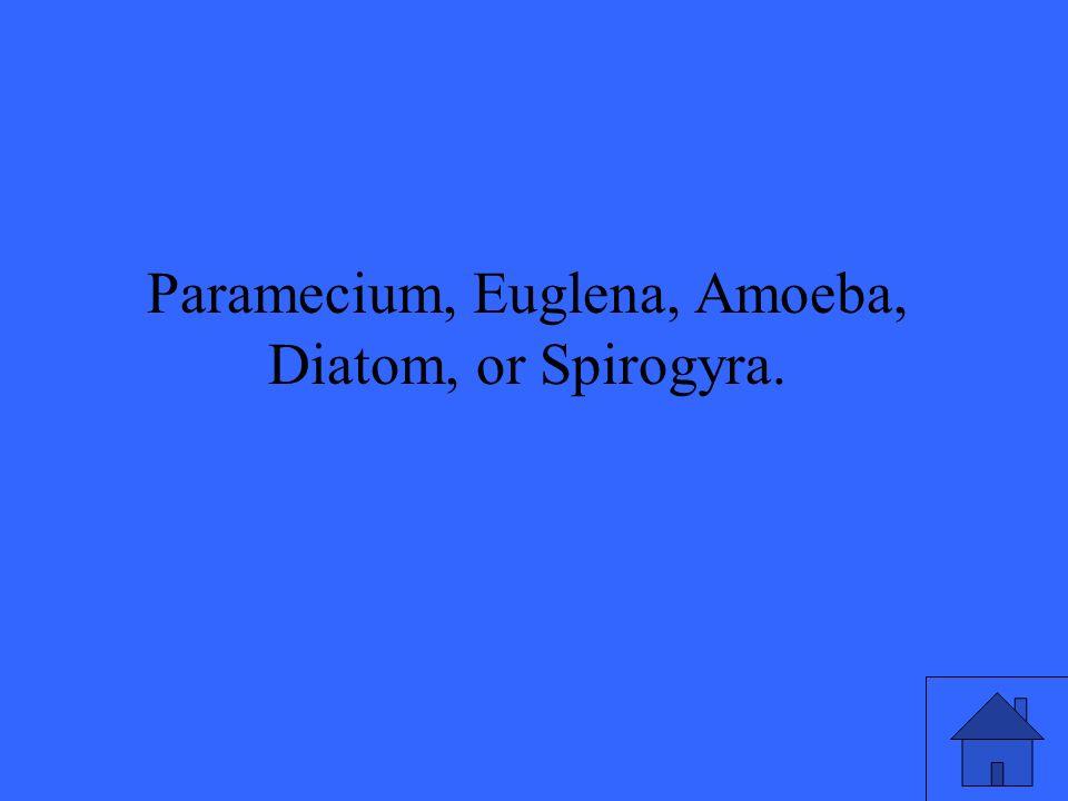 Paramecium, Euglena, Amoeba, Diatom, or Spirogyra.