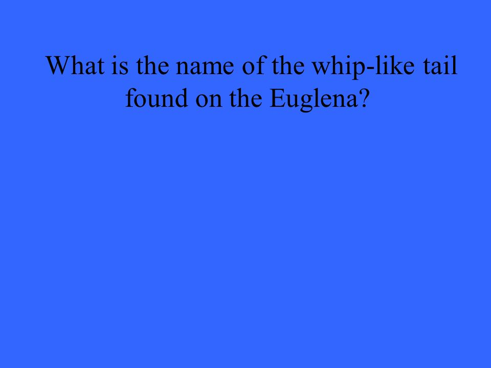 What is the name of the whip-like tail found on the Euglena