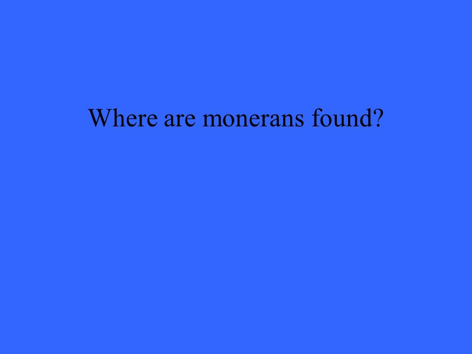 Where are monerans found