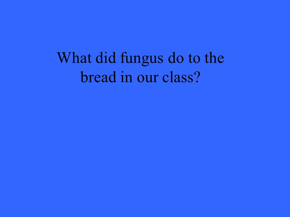 What did fungus do to the bread in our class