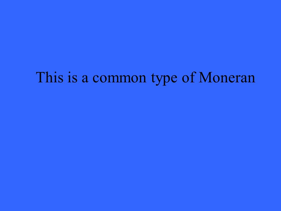 This is a common type of Moneran