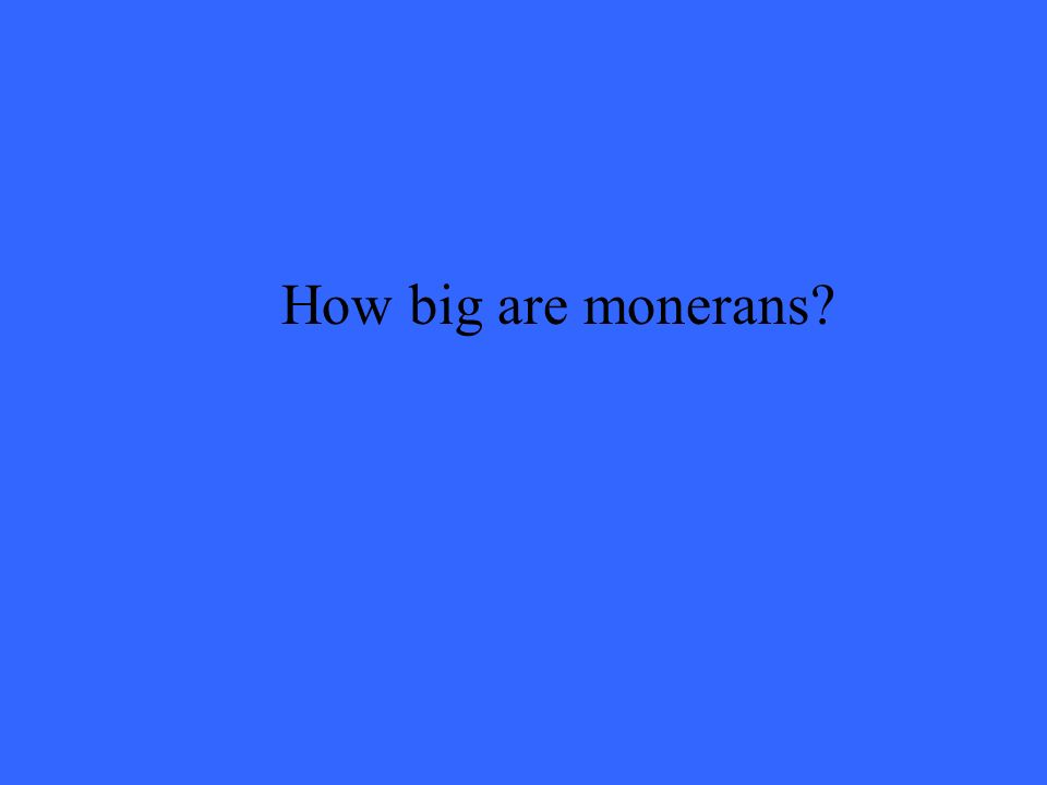 How big are monerans
