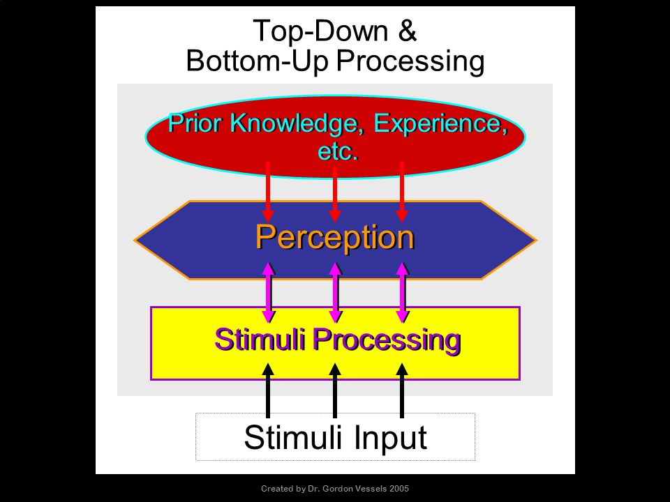 Top-Down & Bottom-Up Processing Prior Knowledge, Experience, etc. Stimuli Processing Perception Stimuli Input Created by Dr. Gordon Vessels 2005