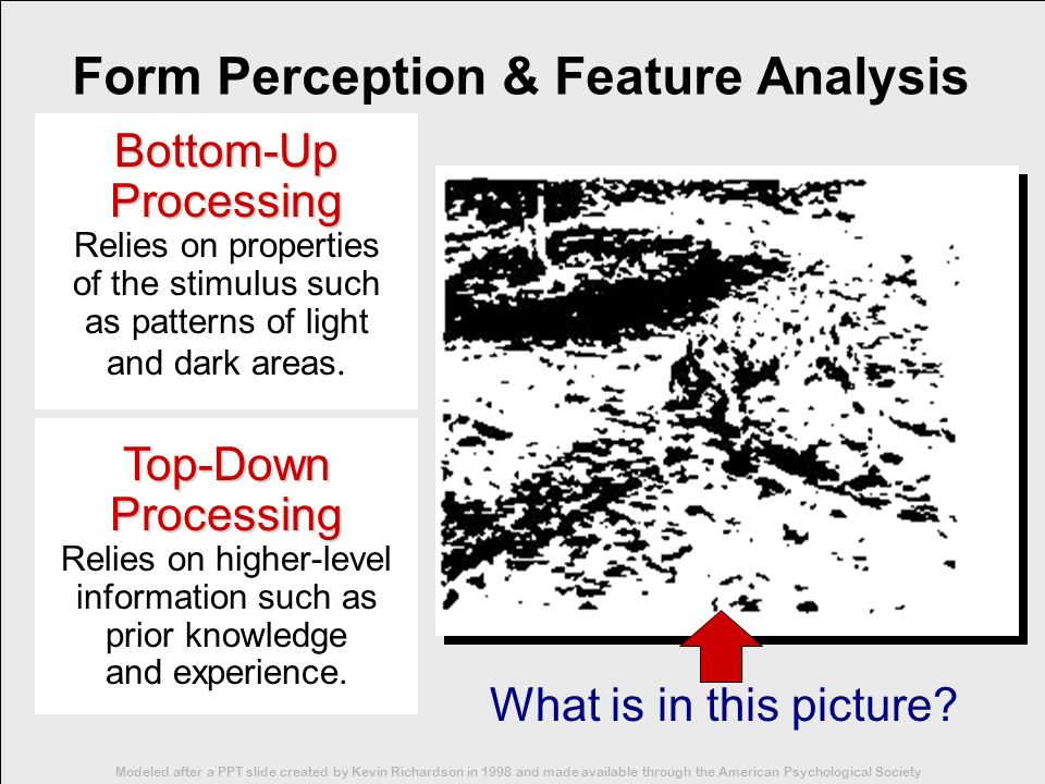 Form Perception & Feature Analysis Bottom-Up Processing Relies on properties of the stimulus such as patterns of light and dark areas. Top-Down Proces