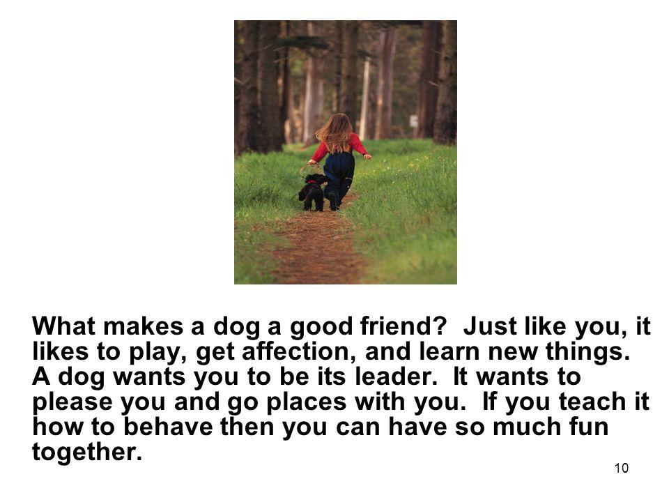 10 What makes a dog a good friend.