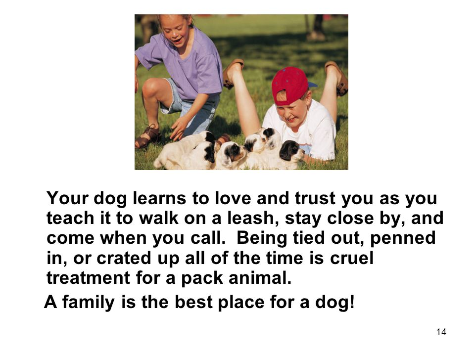 14 Your dog learns to love and trust you as you teach it to walk on a leash, stay close by, and come when you call.