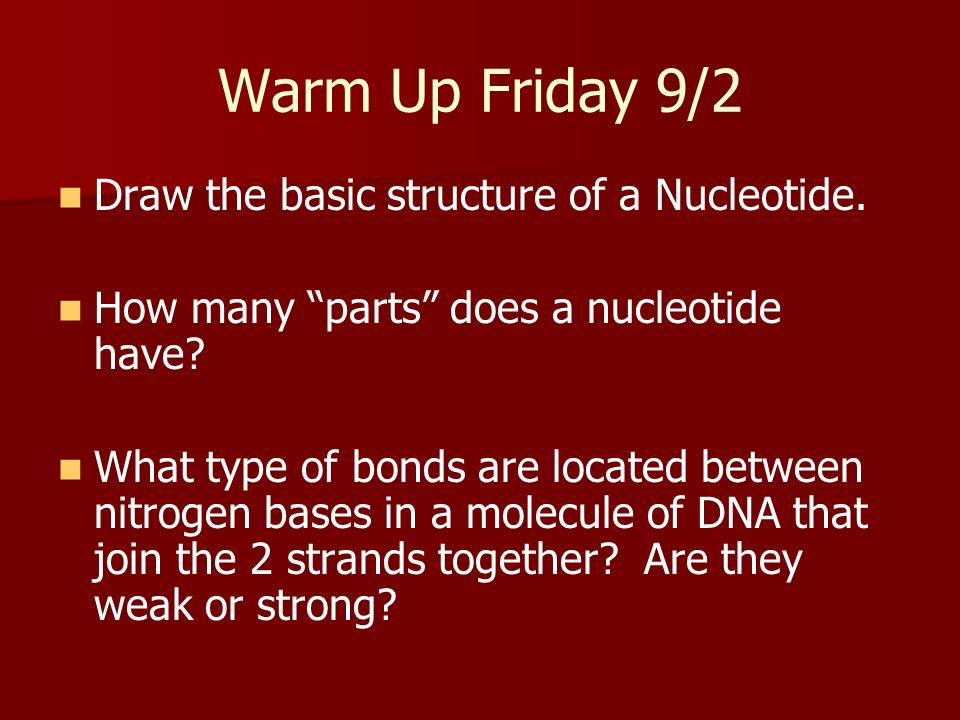 Warm Up Friday 9/2 Draw the basic structure of a Nucleotide. How many parts does a nucleotide have? What type of bonds are located between nitrogen ba