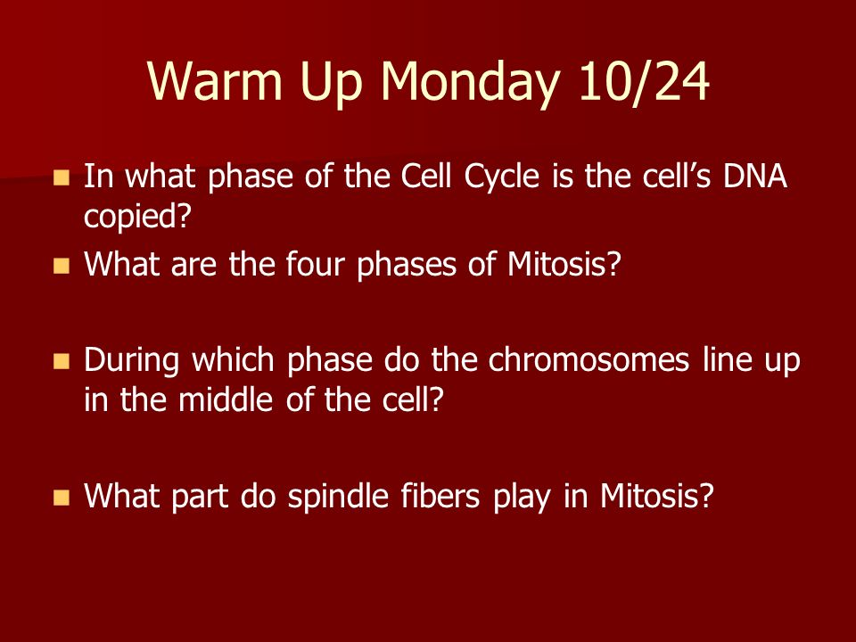 Warm Up Monday 10/24 In what phase of the Cell Cycle is the cells DNA copied? What are the four phases of Mitosis? During which phase do the chromosom