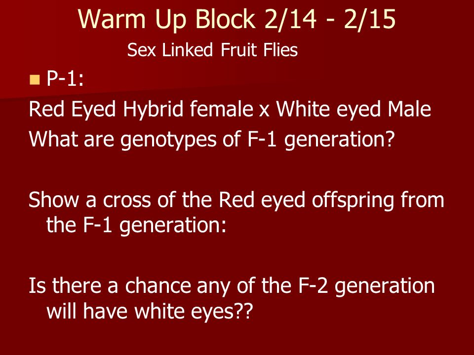 Warm Up Block 2/14 - 2/15 Sex Linked Fruit Flies P-1: Red Eyed Hybrid female x White eyed Male What are genotypes of F-1 generation? Show a cross of t