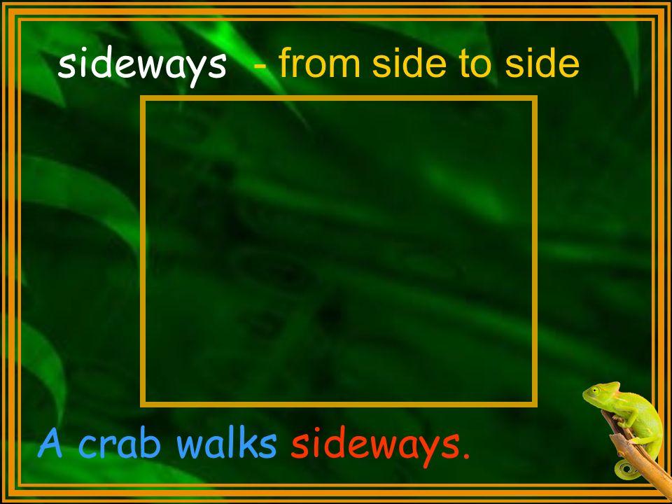 sideways A crab walks sideways. - from side to side