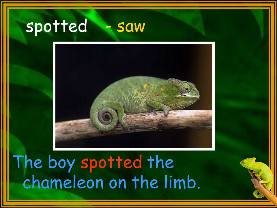spotted The boy spotted the chameleon on the limb. - saw