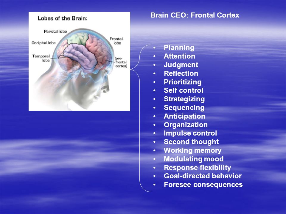 Limbic Cortex and Hypothalamus