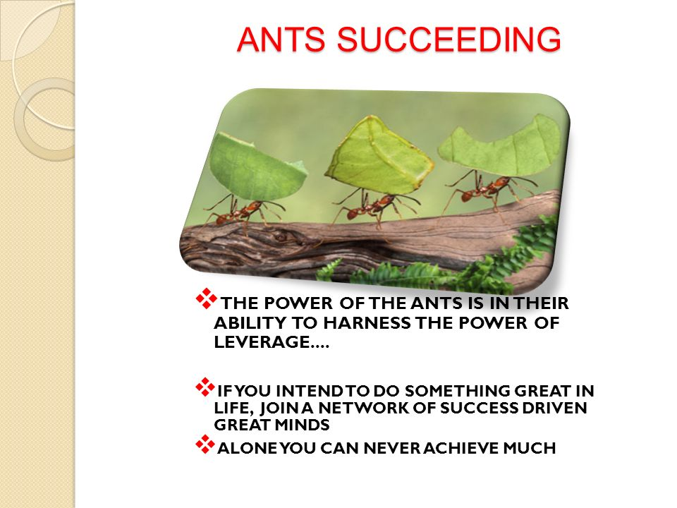 ANTS SUCCEEDING THE POWER OF THE ANTS IS IN THEIR ABILITY TO HARNESS THE POWER OF LEVERAGE.... IF YOU INTEND TO DO SOMETHING GREAT IN LIFE, JOIN A NET