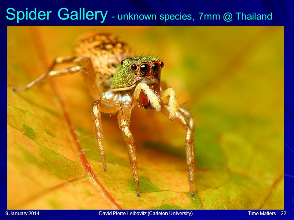 9 January 20149 January 20149 January 2014David Pierre Leibovitz (Carleton University)Time Matters - 22 Spider Gallery - unknown species, 7mm @ Thailand