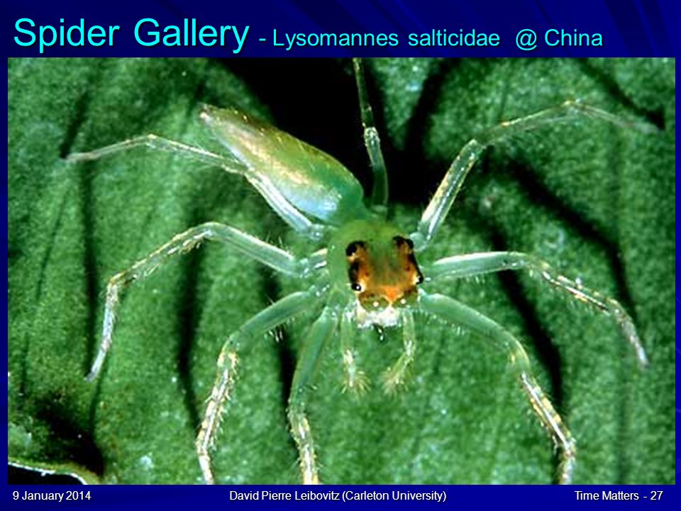 9 January 20149 January 20149 January 2014David Pierre Leibovitz (Carleton University)Time Matters - 27 Spider Gallery - Lysomannes salticidae @ China