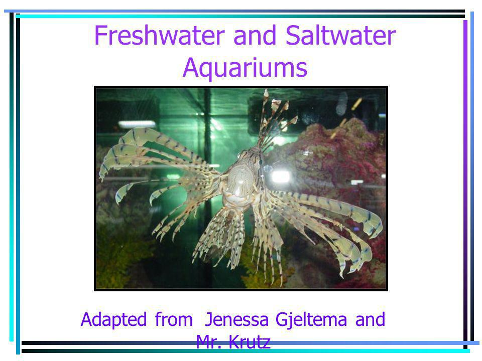 Freshwater and Saltwater Aquariums Adapted from Jenessa Gjeltema and Mr. Krutz
