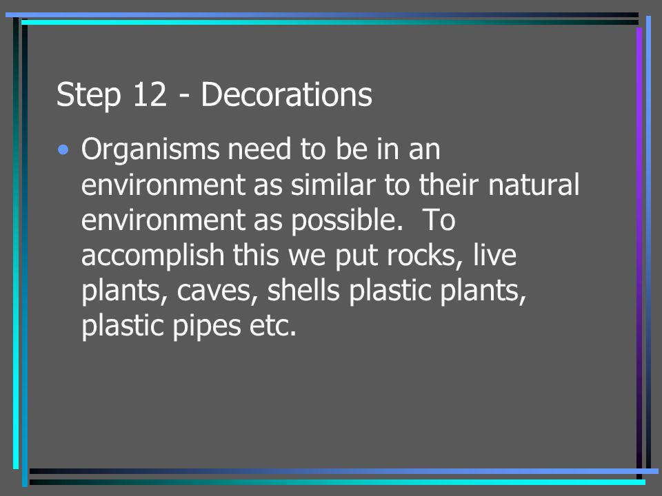 Step 12 - Decorations Organisms need to be in an environment as similar to their natural environment as possible. To accomplish this we put rocks, liv