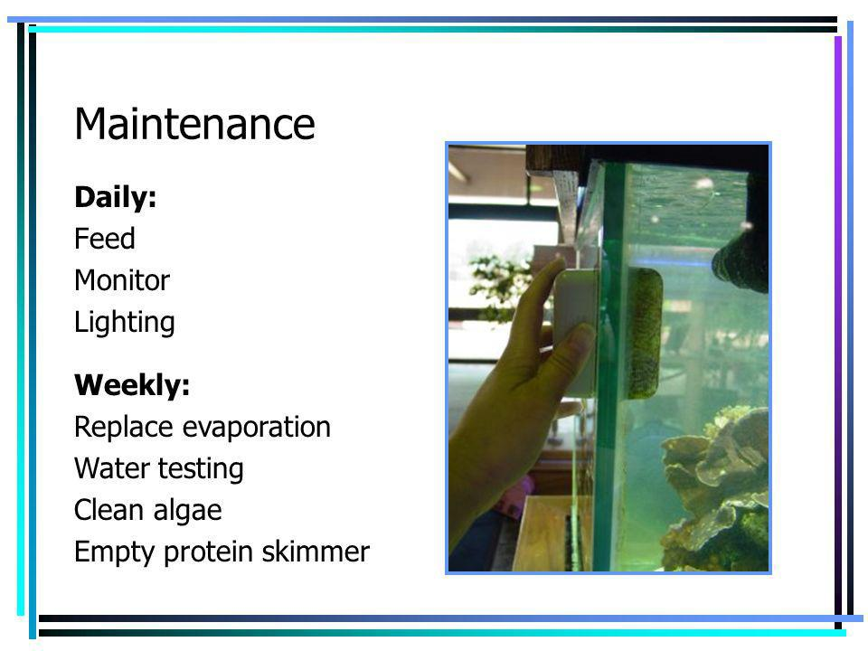 Maintenance Daily: Feed Monitor Lighting Weekly: Replace evaporation Water testing Clean algae Empty protein skimmer
