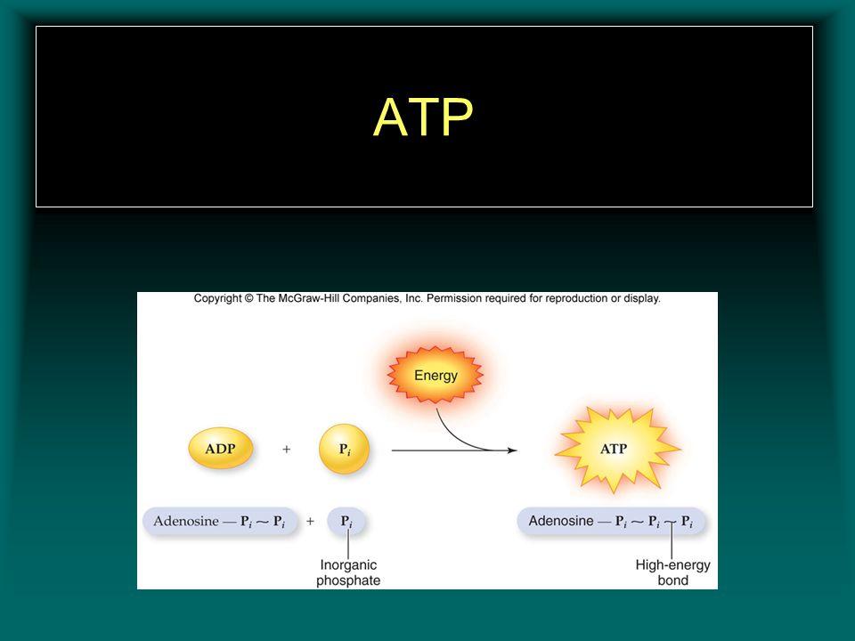 ATP Insert figure 11.4