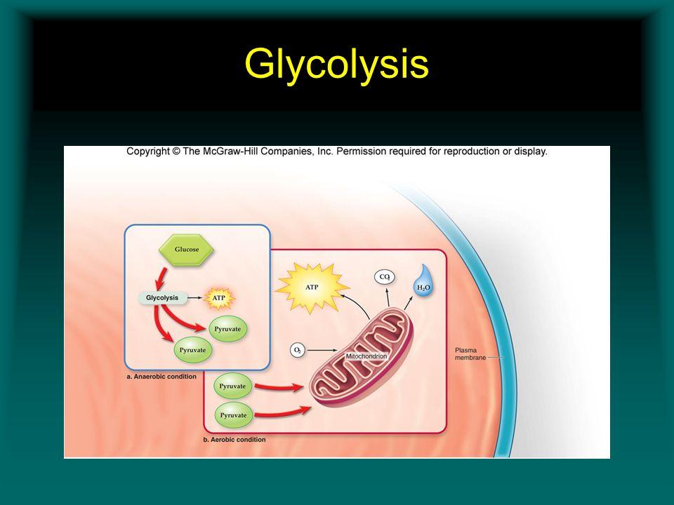 Glycolysis Insert Figure 11.5