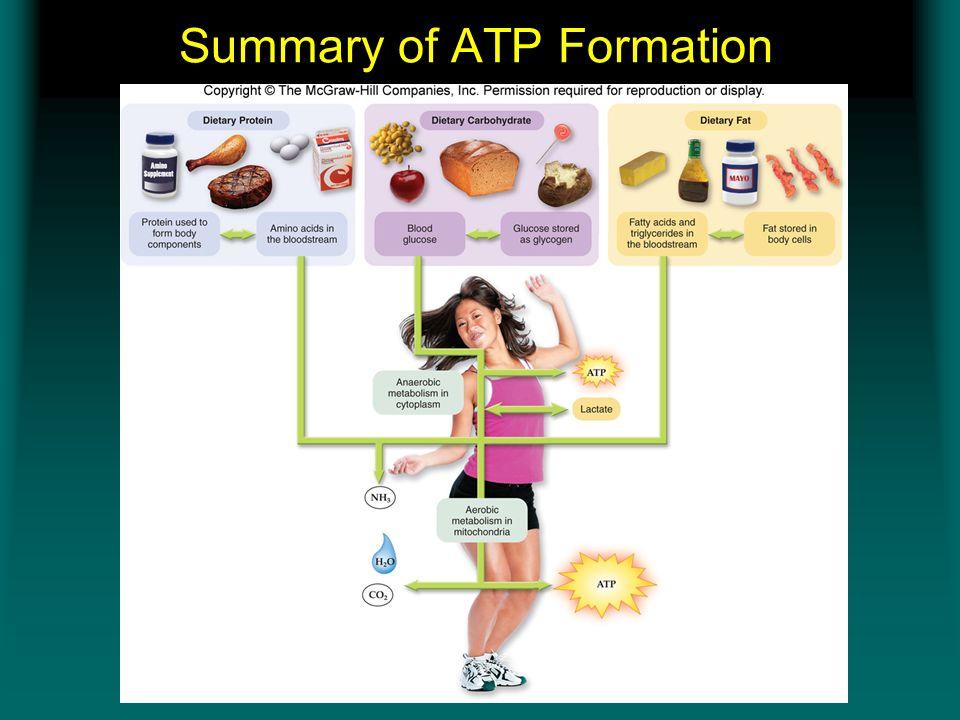 Summary of ATP Formation Insert figure 11.6