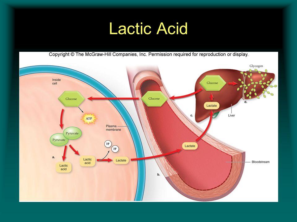 Lactic Acid Insert figure 11.9