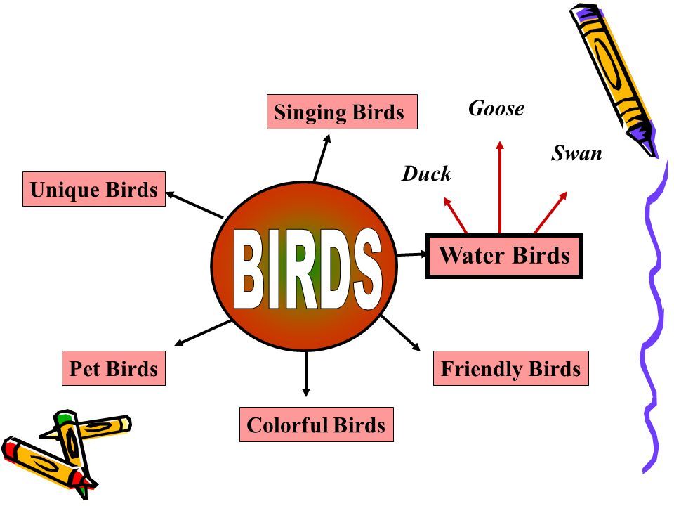 Singing Birds Water Birds Friendly Birds Unique Birds Pet Birds Colorful Birds Duck Swan Goose Myna Cuckoo Nightingale Crow Peahen Sparrow Hyna Peacock Parrot Love bird Hen Wood Pecker Ostrich Eagle Many words radiate / emerge from a central concept.