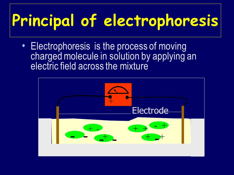Principal of electrophoresis Electrophoresis is the process of moving charged molecule in solution by applying an electric field across the mixture -